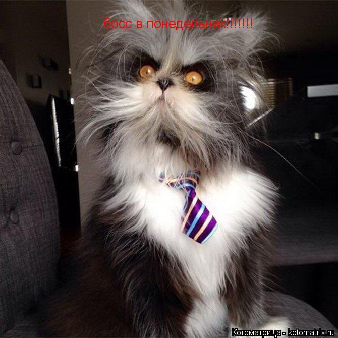 Котоматрица: босс в понедельник!!!!!!!