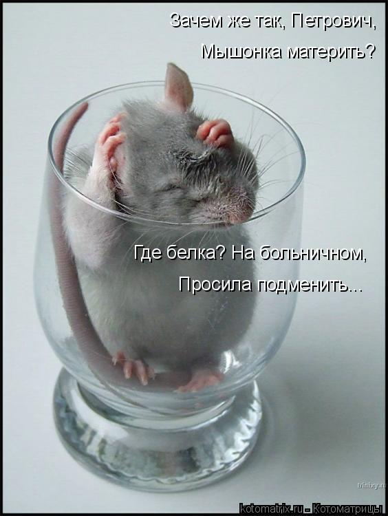 Котоматрица: Зачем же так, Петрович, Мышонка материть? Где белка? На больничном, Просила подменить...