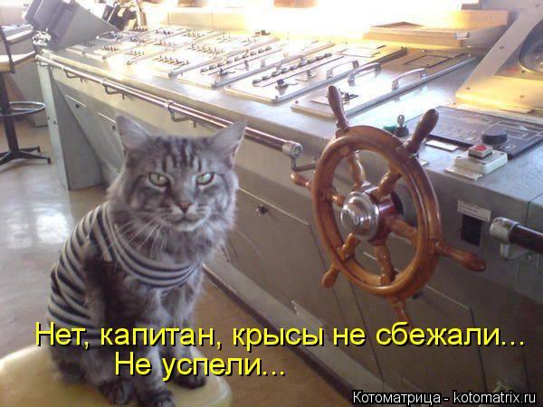 Котоматрица: Нет, капитан, крысы не сбежали... Не успели...
