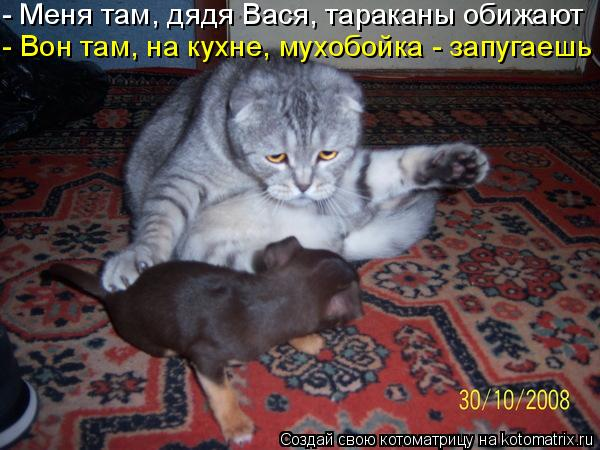 Котоматрица: - Меня там, дядя Вася, тараканы обижают - Вон там, на кухне, мухобойка - запугаешь