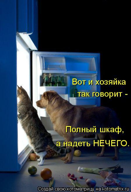 Котоматрица: Вот и хозяйка так говорит - Полный шкаф, а надеть НЕЧЕГО.