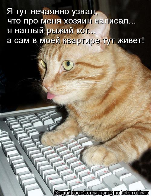 Котоматрица: Я тут нечаянно узнал, что про меня хозяин написал... я наглый рыжий кот... а сам в моей квартире тут живет!