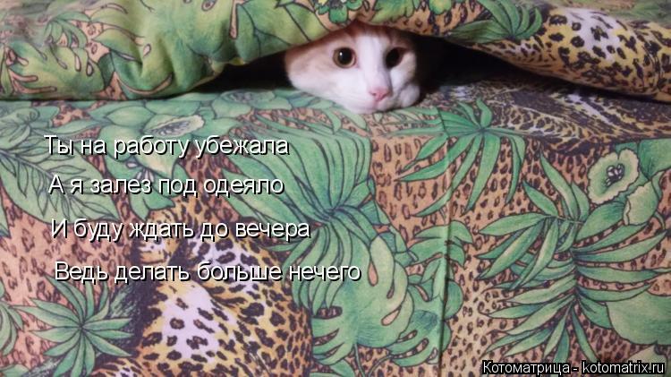 Котоматрица: Ты на работу убежала А я залез под одеяло И буду ждать до вечера Ведь делать больше нечего
