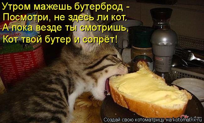 Котоматрица: Утром мажешь бутерброд -  Посмотри, не здесь ли кот. А пока везде ты смотришь, Кот твой бутер и сопрёт!