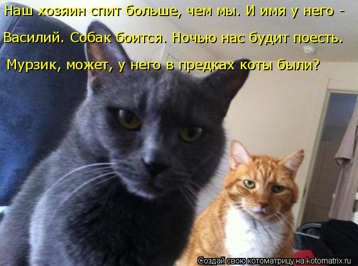 Котоматрица: Наш хозяин спит больше, чем мы. И имя у него -  Василий. Собак боится. Ночью нас будит поесть. Мурзик, может, у него в предках коты были?