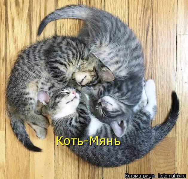 Котоматрица: Коть-Мянь