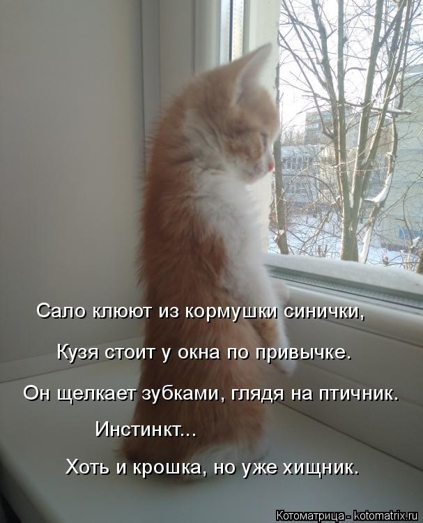 Котоматрица: Сало клюют из кормушки синички, Кузя стоит у окна по привычке. Инстинкт... Хоть и крошка, но уже хищник. Он щелкает зубками, глядя на птичник.