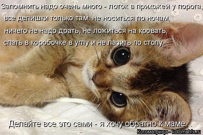 Котоматрица: Делайте все это сами - я хочу обратно к маме... все делишки только там, не носиться по ночам, ничего не надо драть, не ложиться на кровать, спат?