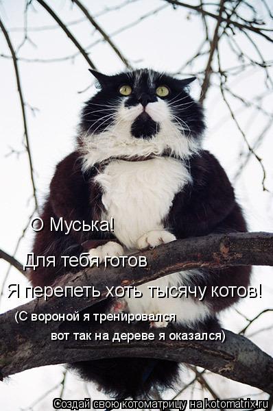 Котоматрица: О Муська! Для тебя готов  Я перепеть хоть тысячу котов! (С вороной я тренировался вот так на дереве я оказался)