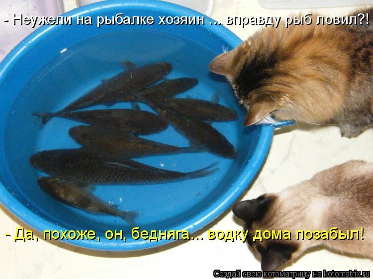 Котоматрица: - Неужели на рыбалке хозяин ... вправду рыб ловил?! - Да, похоже, он, бедняга... водку дома позабыл!