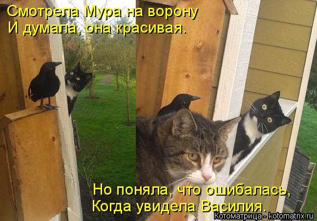 Котоматрица: Смотрела Мура на ворону И думала, она красивая. Но поняла, что ошибалась, Когда увидела Василия.