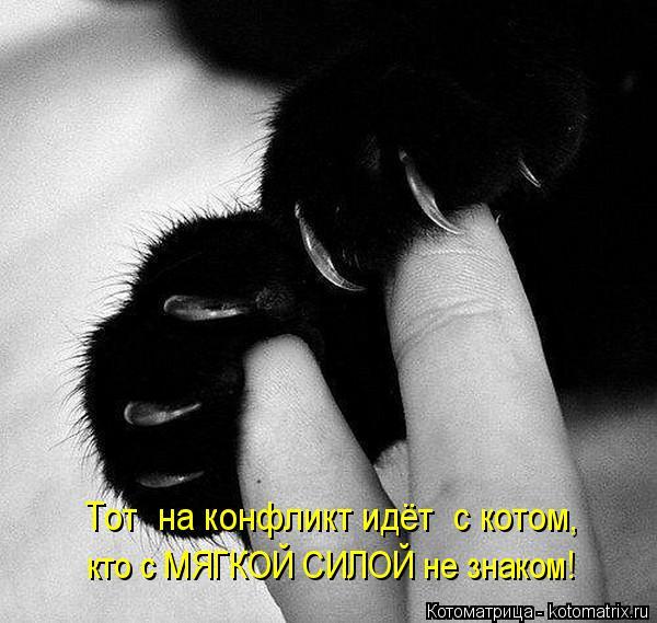 Котоматрица: Тот  на конфликт идёт  с котом, кто с МЯГКОЙ СИЛОЙ не знаком!
