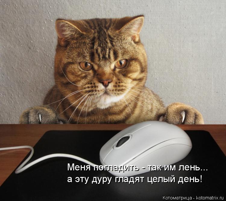 Котоматрица: Меня погладить - так им лень...  а эту дуру гладят целый день!