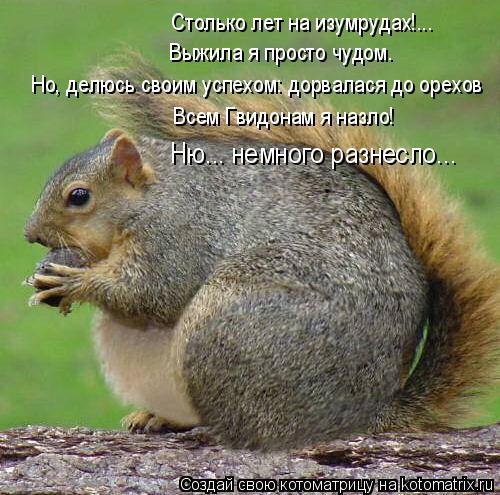 Котоматрица: Столько лет на изумрудах!... Выжила я просто чудом. Всем Гвидонам я назло! Но, делюсь своим успехом: дорвалася до орехов Ню... немного разнесло.