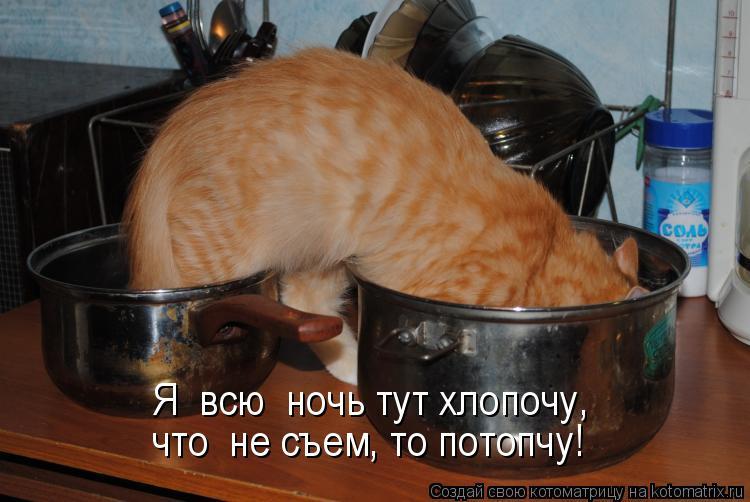 Котоматрица: Я  всю  ночь тут хлопочу, что  не съем, то потопчу!