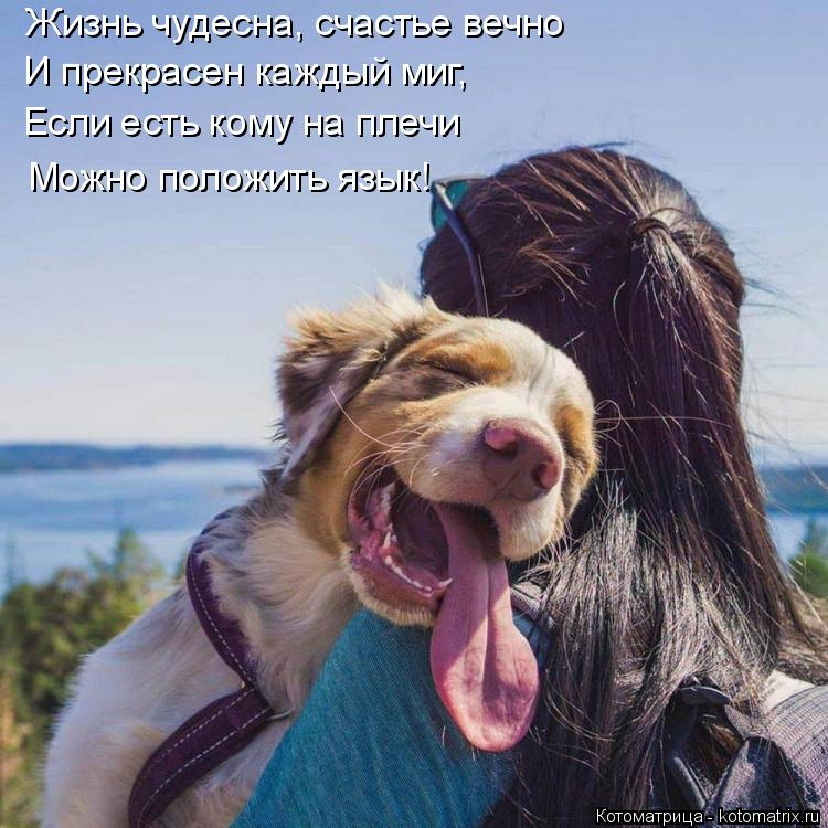 Котоматрица: Жизнь чудесна, счастье вечно И прекрасен каждый миг, Если есть кому на плечи Можно положить язык!