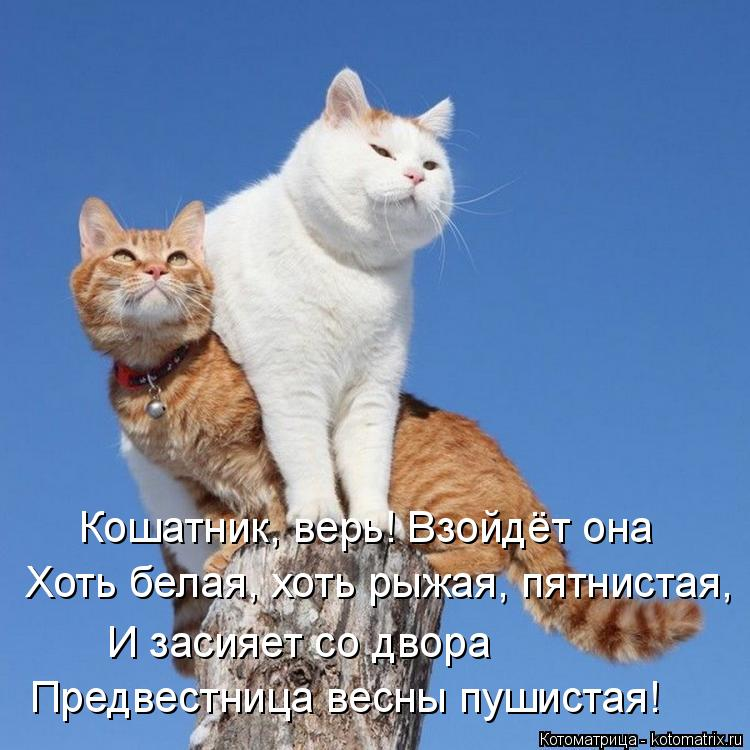 Котоматрица: Кошатник, верь! Взойдёт она  Хоть белая, хоть рыжая, пятнистая,  И засияет со двора  Предвестница весны пушистая!