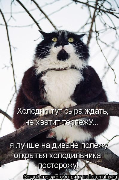 Котоматрица: Холодно тут сыра ждать, не хватит терпежУ... я лучше на диване полежу открытья холодильника  посторожу!