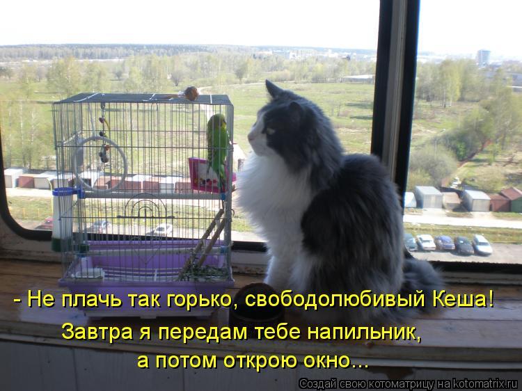 Котоматрица: - Не плачь так горько, свободолюбивый Кеша! Завтра я передам тебе напильник,  а потом открою окно...