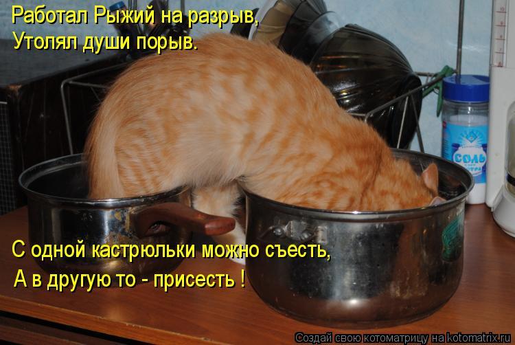 Котоматрица: Утолял души порыв. Работал Рыжий на разрыв, С одной кастрюльки можно съесть, А в другую то - присесть !