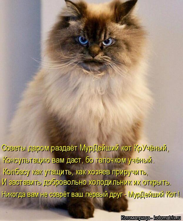 Котоматрица: Советы даром раздаёт МурДейший кот КрУчёный,  Консультацию вам даст, бо тапочком учёный. Колбасу как утащить, как хозяев приручить, И застав