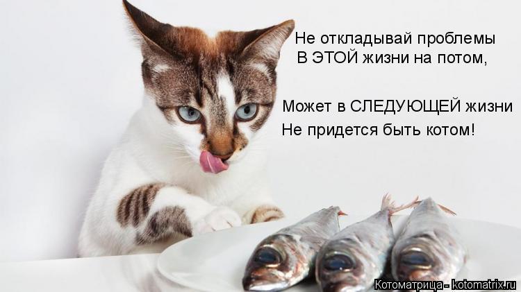 Котоматрица: Не откладывай проблемы В ЭТОЙ жизни на потом, Может в СЛЕДУЮЩЕЙ жизни Не придется быть котом!