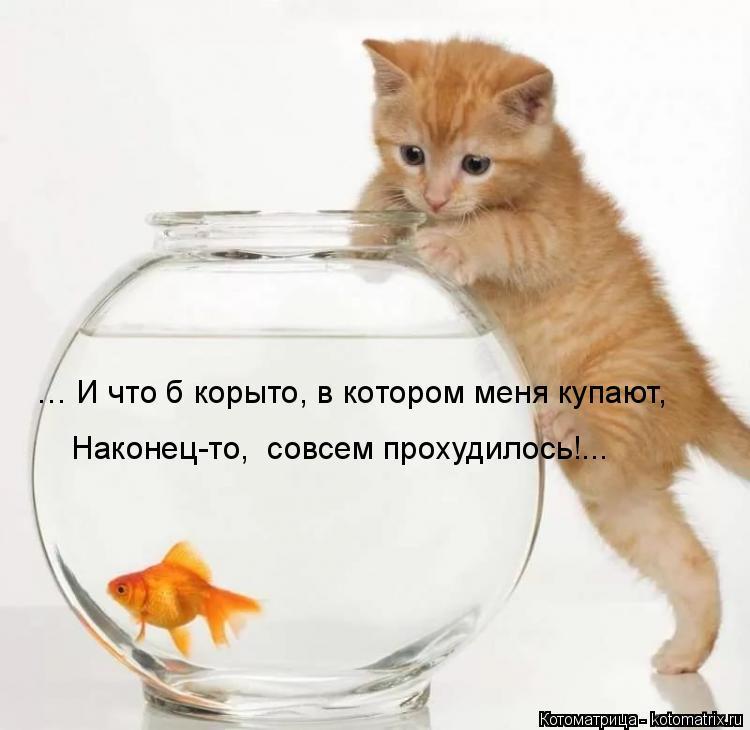 Котоматрица: … И что б корыто, в котором меня купают, Наконец-то,  совсем прохудилось!...
