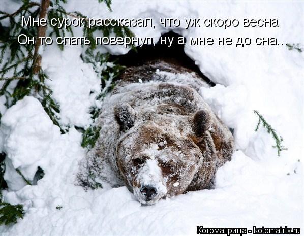 Котоматрица: Мне сурок рассказал, что уж скоро весна Он то спать повернул, ну а мне не до сна...