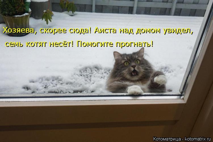 Котоматрица: Хозяева, скорее сюда! Аиста над домом увидел,  семь котят несёт! Помогите прогнать!