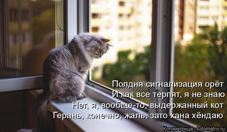 Котоматрица: Полдня сигнализация орёт И как все терпят, я не знаю  Нет, я, вообще-то, выдержанный кот   Герань, конечно, жаль, зато хана хёндаю