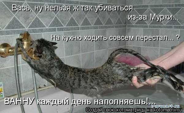 Котоматрица: Вась, ну нельзя ж так убиваться  из-за Мурки... ВАННУ каждый день наполняешь!... На кухню ходить совсем перестал... ?