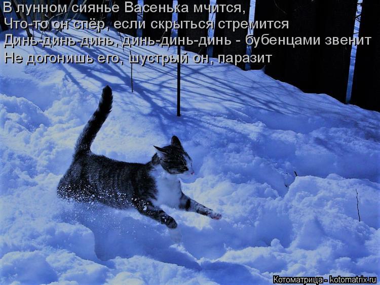 Котоматрица: В лунном сиянье Васенька мчится, Что-то он спёр, если скрыться стремится Динь-динь-динь, динь-динь-динь - бубенцами звенит Не догонишь его, шу
