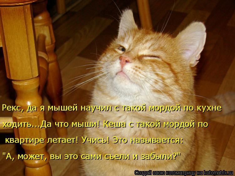 """Котоматрица: Рекс, да я мышей научил с такой мордой по кухне  ходить...Да что мыши! Кеша с такой мордой по  квартире летает! Учись! Это называется:  """"А, может,"""