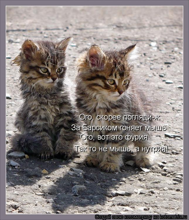 Котоматрица: Ого, скорее погляди-ж За Барсиком гоняет мышь Ого, вот это фурия Так то не мышь, а нутрия!