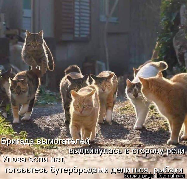 Котоматрица: Бригада вымогателей  выдвинулась в сторону реки Улова если нет,  готовьтесь бутербродами делиться, рыбаки