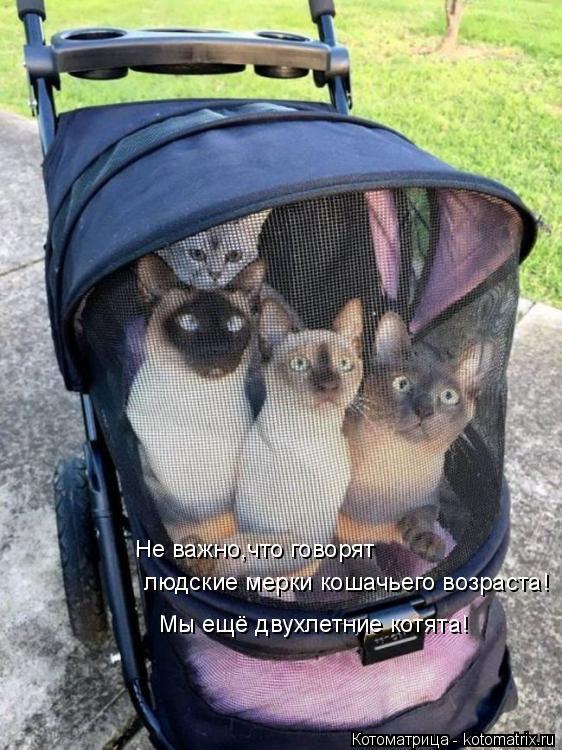 Котоматрица: Не важно,что говорят  людские мерки кошачьего возраста! Мы ещё двухлетние котята!