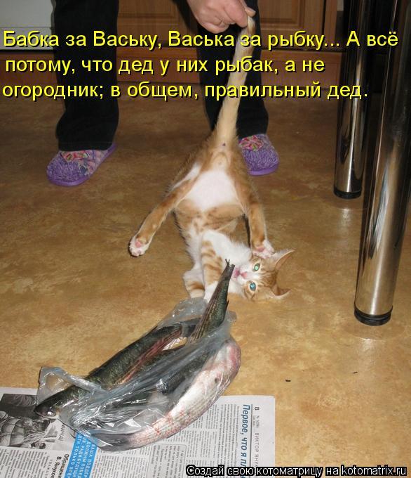 Котоматрица: Бабка за Ваську, Васька за рыбку... А всё потому, что дед у них рыбак, а не огородник; в общем, правильный дед.