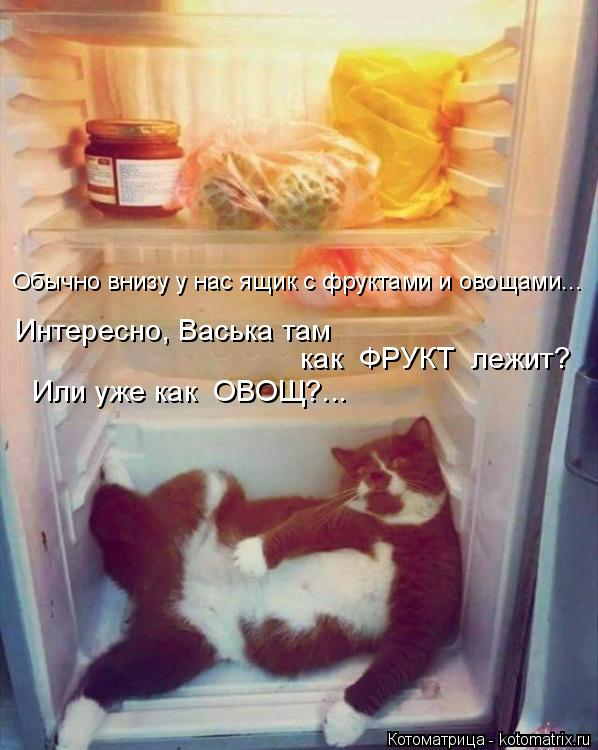 Котоматрица: Обычно внизу у нас ящик с фруктами и овощами... Или уже как  ОВОЩ?...  как  ФРУКТ  лежит? Интересно, Васька там