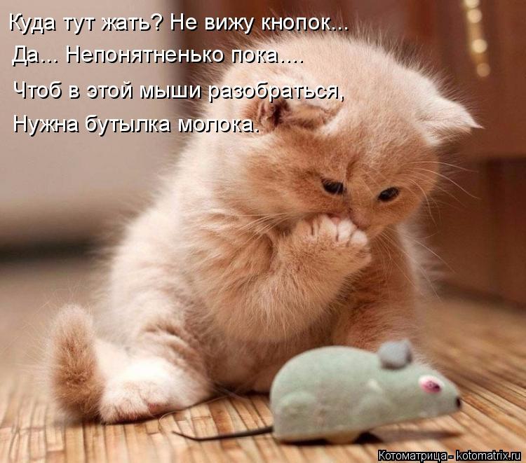 Котоматрица: Куда тут жать? Не вижу кнопок... Да... Непонятненько пока.... Чтоб в этой мыши разобраться, Нужна бутылка молока.