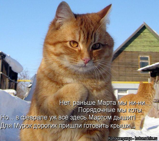 Котоматрица: Для Мурок дорогих пришли готовить крыши... Но... в феврале уж всё здесь Мартом дышит! Порядочные мы коты. Нет, раньше Марта мы ни-ни...