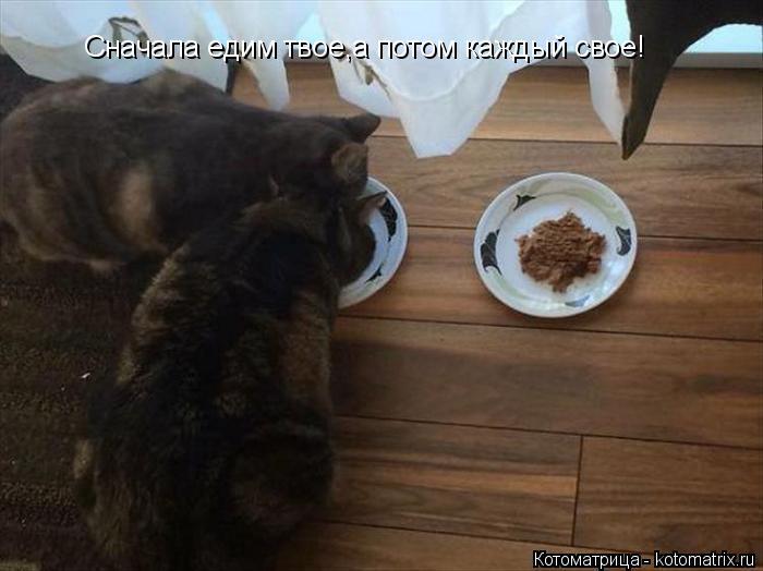 Котоматрица: Сначала едим твое,а потом каждый свое!