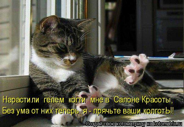 Котоматрица: Нарастили  гелем  когти  мне в  Салоне Красоты, Без ума от них теперь  я - прячьте ваши колготЫ!