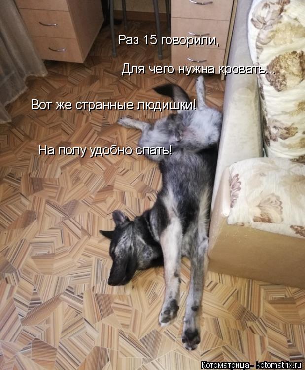 Котоматрица: Раз 15 говорили, Для чего нужна кровать... Вот же странные людишки! На полу удобно спать!