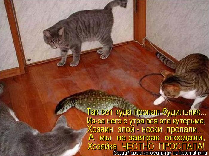 Котоматрица: Так вот куда пропал будильник... Из-за него с утра вся эта кутерьма, Хозяин  злой - носки  пропали... А  мы  на завтрак  опоздали, Хозяйка  ЧЕСТНО