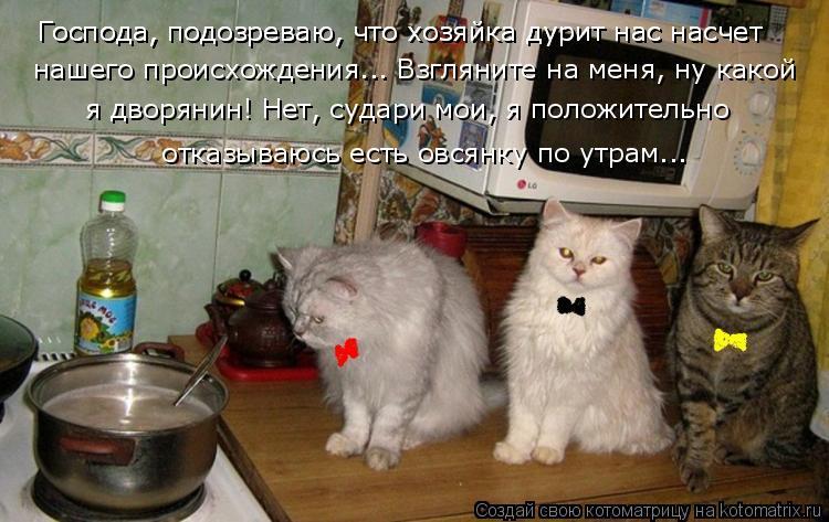 Котоматрица: Господа, подозреваю, что хозяйка дурит нас насчет Господа, подозреваю, что хозяйка дурит нас насчет  нашего происхождения... Взгляните на ме?