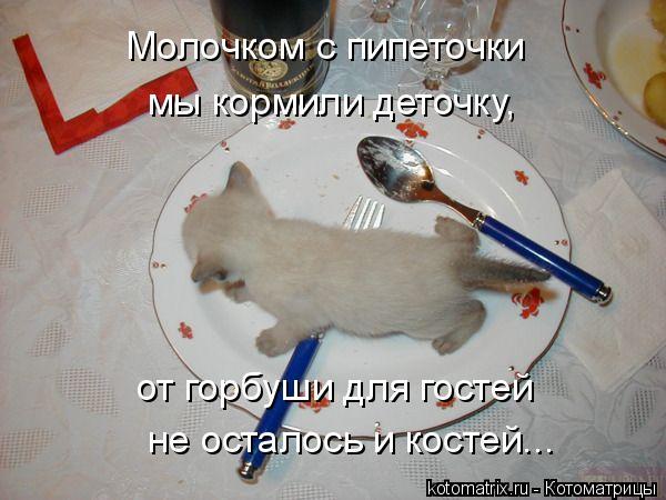 Котоматрица: Молочком с пипеточки мы кормили деточку, от горбуши для гостей не осталось и костей...