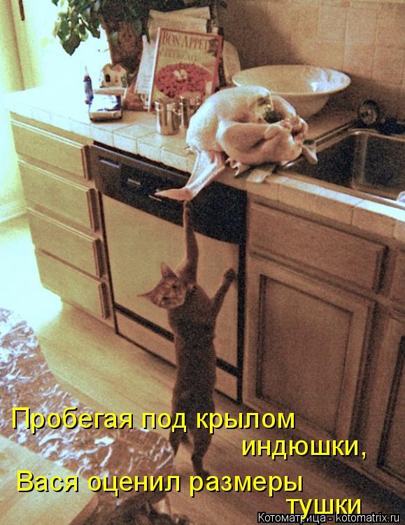 Котоматрица: Пробегая под крылом индюшки,  Вася оценил размеры тушки