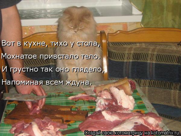 Котоматрица: Вот в кухне, тихо у стола, Мохнатое привстало тело. И грустно так оно глядело, Напоминая всем ждуна.
