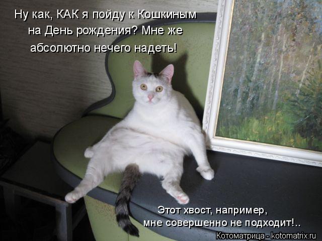 Котоматрица: Ну как, КАК я пойду к Кошкиным  на День рождения? Мне же  абсолютно нечего надеть! Этот хвост, например, мне совершенно не подходит!..