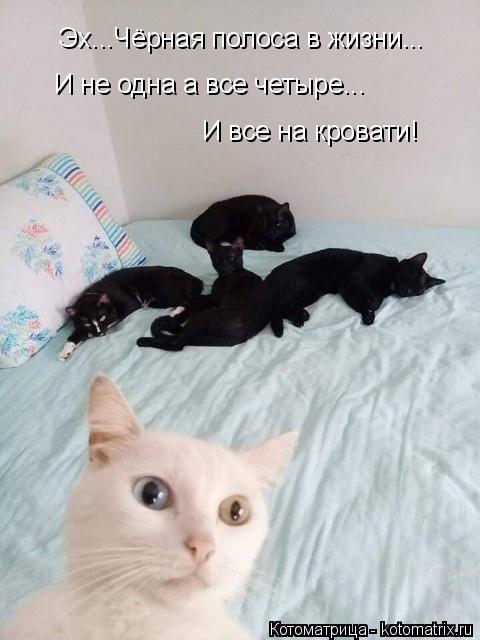 Котоматрица: Эх...Чёрная полоса в жизни... И не одна а все четыре... И все на кровати!